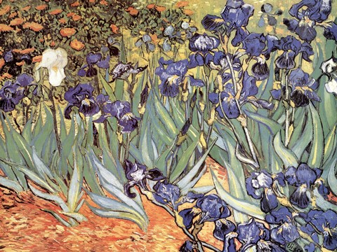 Framed Irises in the Garden, Saint-Remy, c.1889 Print