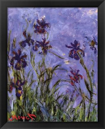 Framed Iris Print