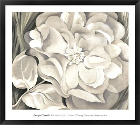 Framed White Calico Flower, 1931 Print